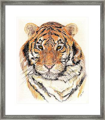 Framed Print featuring the drawing Tiger Bright by Stephanie Grant