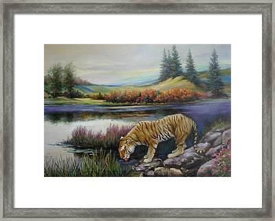 Tiger By The River Framed Print by Svitozar Nenyuk
