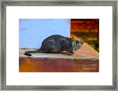 Tiger Cat With Luminous Eyes Framed Print by Gina Koch