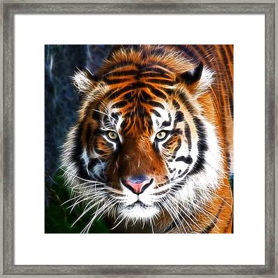 Tiger Close Up Framed Print by Steve McKinzie
