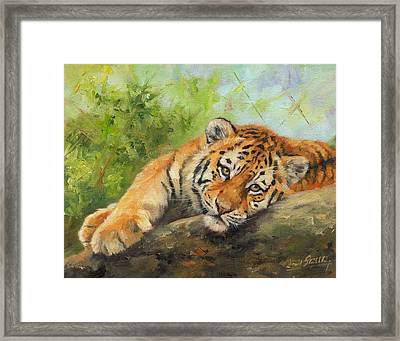 Tiger Cub Resting Framed Print by David Stribbling
