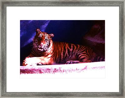Framed Print featuring the photograph Tiger Cub by Victoria Lakes