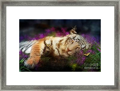 Tiger Dreams Framed Print by Aimee Stewart