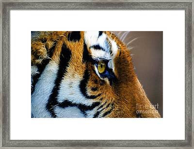 Tiger Eye Framed Print