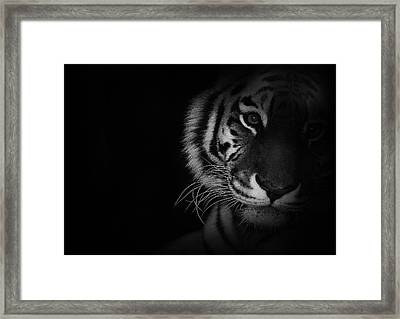Tiger Eyes Framed Print by Martin Newman