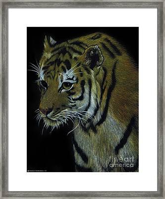 Tiger In The Dark  Framed Print by Monica Margarida