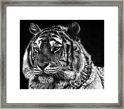 Tiger Framed Print by Joey Bergeron