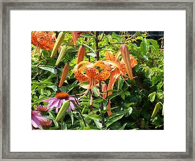 Tiger Lilies Framed Print by Catherine Gagne