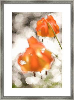 Tiger Lillies Near The Rogue Wild River Framed Print by Phil Schermeister