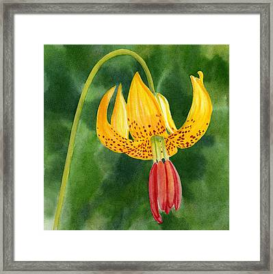 Tiger Lily Blossom With Background Framed Print by Sharon Freeman