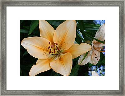 Framed Print featuring the photograph Tiger Lily by Dora Sofia Caputo Photographic Art and Design