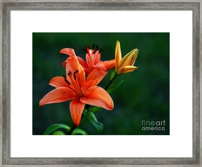 Tiger Lily Enchantment  Framed Print by Inspired Nature Photography Fine Art Photography