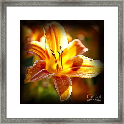 Tiger Lily Flower Framed Print