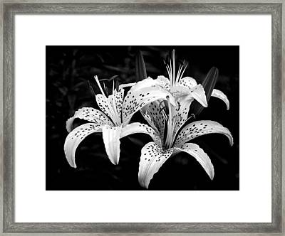 Tiger Lily I Framed Print by Jeff Burton
