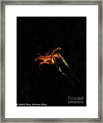 Tiger Lily On Black Framed Print by Mary  King