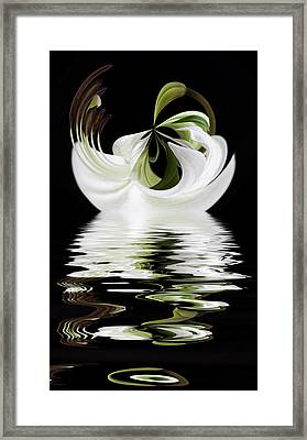 Tiger Lily Reflected Framed Print by Cyndy Doty