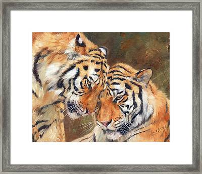 Tiger Love Framed Print
