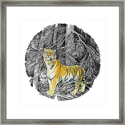 Tiger Framed Print by Natalie Berman