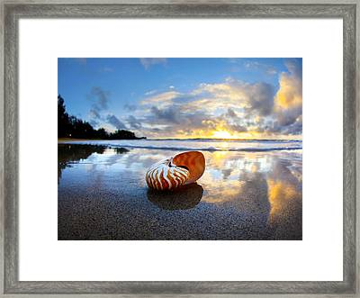 Tiger Nautilus Sunrise Framed Print by Sean Davey