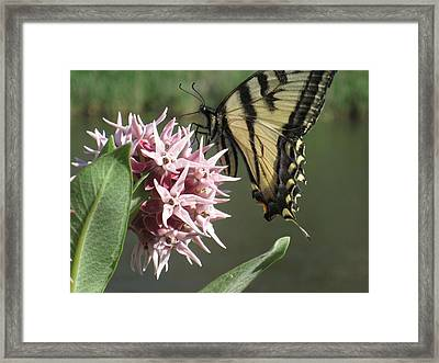 tiger on the Rio Grande Framed Print