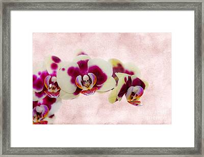 Tiger Orchid Framed Print by Svetlana Sewell
