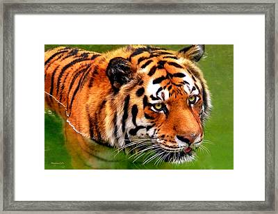 Tiger Painting Framed Print by Christina Rollo