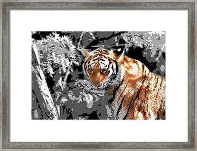 Tiger Poster Framed Print by Dan Sproul