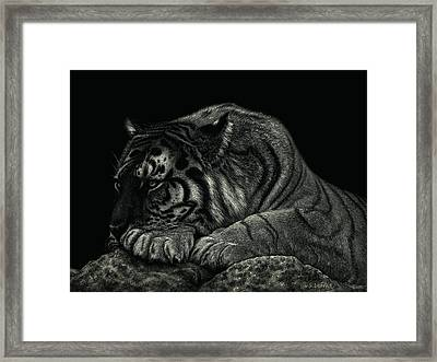 Tiger Power At Peace Framed Print by Sandra LaFaut
