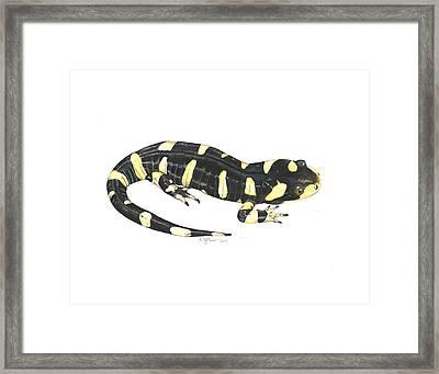 Tiger Salamander Framed Print