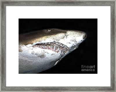Tiger Shark Framed Print by Sergey Lukashin