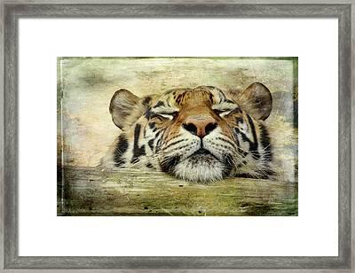 Tiger Snooze Framed Print