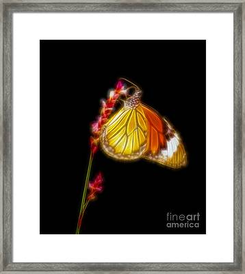Tiger Striped Butterfly Fractal Art Framed Print by Image World
