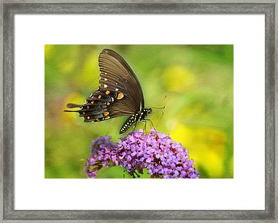 Tiger Swallowtail  Framed Print by Ann Bridges