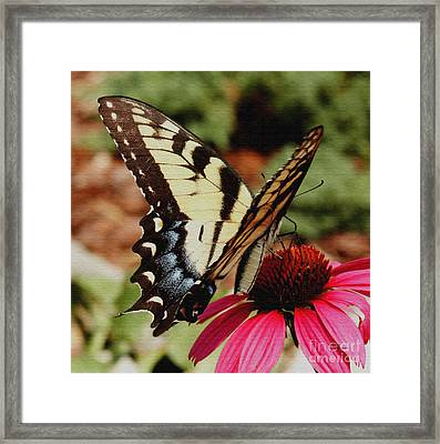 Framed Print featuring the photograph Tiger Swallowtail  by James C Thomas