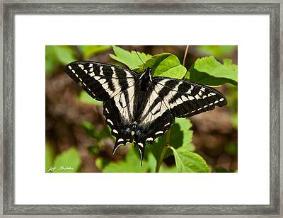 Framed Print featuring the photograph Tiger Swallowtail Butterfly by Jeff Goulden