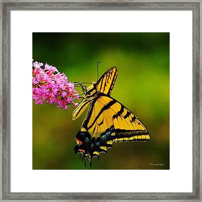 Tiger Swallowtail Butterfly Framed Print by Karen Slagle
