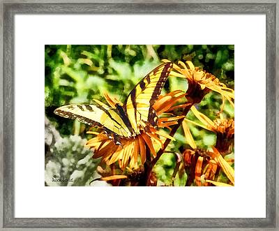 Tiger Swallowtail On Yellow Wildflower Framed Print by Susan Savad