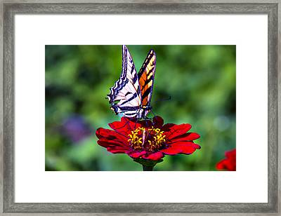 Tiger Tail On Red Flower Framed Print by Garry Gay