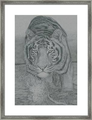 Tiger Through Water Framed Print by Rich Colvin