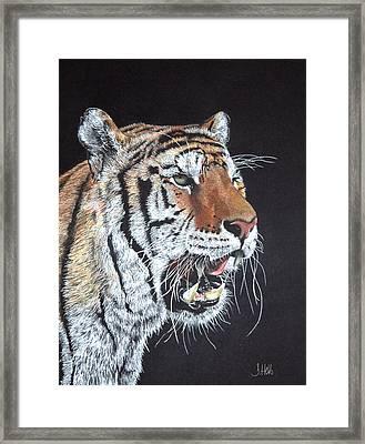 Tiger Tiger Burning Bright Framed Print by John Hebb