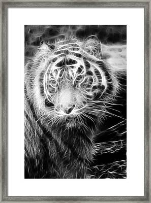 Tiger Tiger Framed Print by Mark Kember