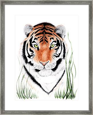 Tiger Tiger Where Framed Print
