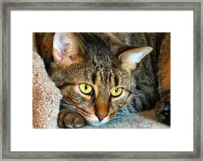 Tiger Time Framed Print by Art Dingo