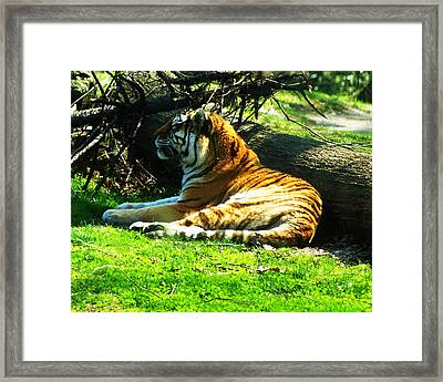 Framed Print featuring the photograph Tiger Too by B Wayne Mullins