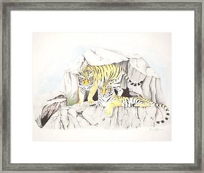Tiger Twins Framed Print by Dag Sla