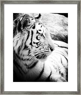 Framed Print featuring the photograph Tiger Watch by Erika Weber
