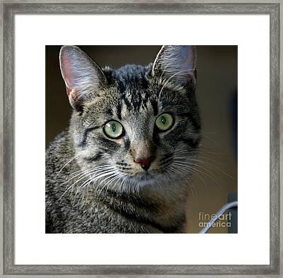 Tiger2 Framed Print