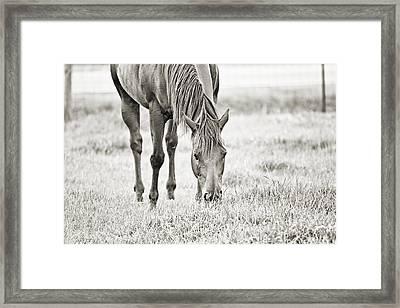 Tigerlily - Sepia Framed Print