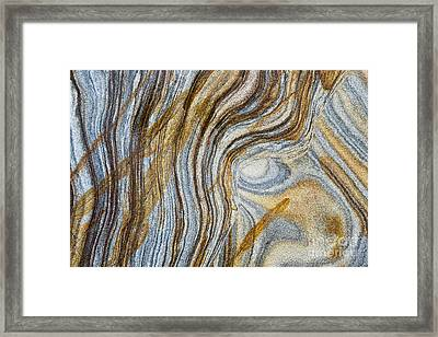 Tigers Eye Framed Print by Tim Gainey