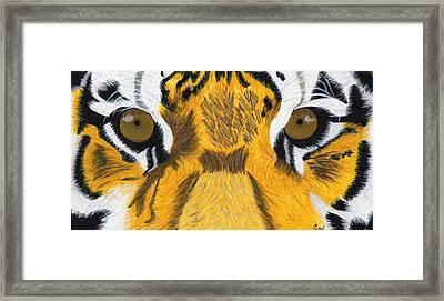 Tiger's Eyes Framed Print by Bav Patel